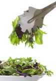 κύπελλο που γεμίζει το απομονωμένο λευκό σαλάτας στοκ εικόνες