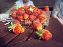 Κύπελλο των φραουλών Στοκ φωτογραφία με δικαίωμα ελεύθερης χρήσης