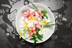 Κύπελλο του νερού με Frangipani ή το plumeria Στοκ εικόνες με δικαίωμα ελεύθερης χρήσης