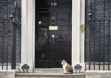 10 κύρια Mouser του Downing Street γάτα Στοκ Εικόνα