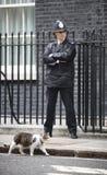 10 κύρια Mouser του Downing Street γάτα Στοκ φωτογραφίες με δικαίωμα ελεύθερης χρήσης