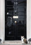 10 κύρια Mouser του Downing Street γάτα Στοκ Φωτογραφία