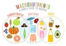 Κύριες ομάδες τροφίμων ελεύθερη απεικόνιση δικαιώματος