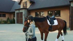 Κύριο άλογο γυναικών από το σταύλο απόθεμα βίντεο