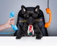 Κύριο σκυλί εργαζομένων γραφείων Στοκ εικόνα με δικαίωμα ελεύθερης χρήσης