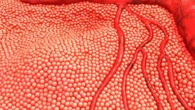Κύτταρα ανθρώπινου σώματος στοκ φωτογραφίες