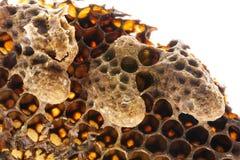 Κύτταρα βασίλισσας σμήνων, κύτταρα βασίλισσας έκτακτης ανάγκης στοκ εικόνα