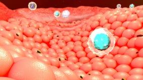 Κύτταρα σώματος στοκ φωτογραφία