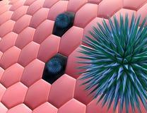 κύτταρα Στοκ φωτογραφίες με δικαίωμα ελεύθερης χρήσης