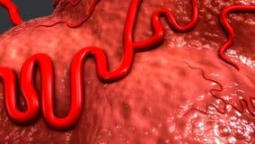 Κύτταρο καρκίνου του μαστού διανυσματική απεικόνιση