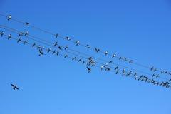 Κύψελλοα στα καλώδια κάτω από το μπλε ουρανό Στοκ φωτογραφία με δικαίωμα ελεύθερης χρήσης