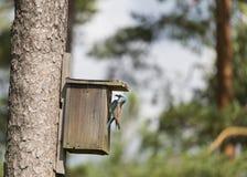 Κύλινδρος στο κλουβί πουλιών Στοκ Εικόνα