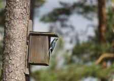 Κύλινδρος στο κλουβί πουλιών Στοκ εικόνες με δικαίωμα ελεύθερης χρήσης