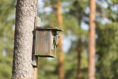 Κύλινδρος στο κλουβί πουλιών Στοκ Φωτογραφία