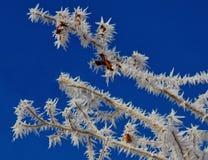 Κώνοι και παγετός πεύκων στοκ φωτογραφίες