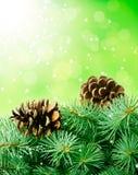 Κώνοι και fir-tree πεύκων Στοκ Εικόνα