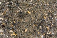 Κώνοι πεύκων, ένα στρώμα των κώνων στο έδαφος, ένας σωρός των κώνων χωρίς σπόρους, ξηροί κώνοι σε έναν σωρό στοκ φωτογραφίες