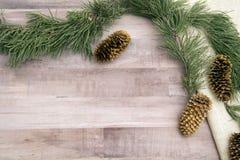 Κώνοι πεύκων και δέντρο πεύκων Στοκ Φωτογραφίες