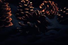 Κώνοι πεύκων σε ένα σκοτεινό υπόβαθρο που φωτίζεται Στοκ φωτογραφίες με δικαίωμα ελεύθερης χρήσης