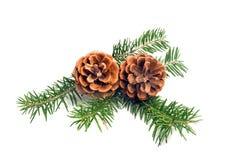 Κώνοι πεύκων Χριστουγέννων στοκ εικόνα με δικαίωμα ελεύθερης χρήσης