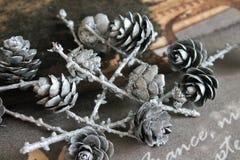 Κώνοι πεύκων, Χριστούγεννα Στοκ Εικόνες