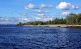 Κώνοι σε ένα δέντρο πεύκων Στοκ εικόνες με δικαίωμα ελεύθερης χρήσης