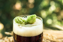 Κώνοι των λυκίσκων στην κινηματογράφηση σε πρώτο πλάνο μπύρας, υπόβαθρο Στοκ Εικόνες