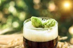 Κώνοι των λυκίσκων στην κινηματογράφηση σε πρώτο πλάνο μπύρας, υπόβαθρο Στοκ Εικόνα