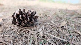 Κώνος πεύκων στο έδαφος Στοκ Εικόνες