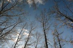 Κλάδοι δέντρων ενάντια στον ουρανό Στοκ εικόνα με δικαίωμα ελεύθερης χρήσης
