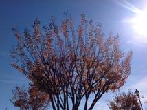 Κλάδοι δέντρων και το φως του ήλιου Στοκ Φωτογραφία