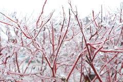 Κλάδοι δέντρων κατά τη διάρκεια της θύελλας πάγου Στοκ φωτογραφίες με δικαίωμα ελεύθερης χρήσης