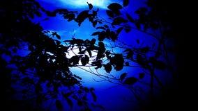 Κλάδοι δέντρων μπροστά από το νυχτερινό ουρανό απόθεμα βίντεο