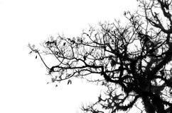 Κλάδοι δέντρων που απομονώνονται Στοκ φωτογραφία με δικαίωμα ελεύθερης χρήσης