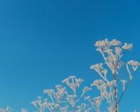 Κλάδοι δέντρων που καλύπτονται με τον παγετό και το χιόνι Στοκ φωτογραφία με δικαίωμα ελεύθερης χρήσης