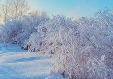 Κλάδοι δέντρων που καλύπτονται με τον παγετό και το χιόνι Στοκ Εικόνες