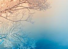 Κλάδοι δέντρων που καλύπτονται με τον παγετό και το χιόνι Στοκ Εικόνα