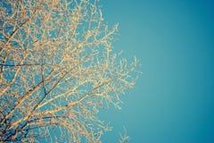Κλάδοι δέντρων που καλύπτονται με το hoarfrost στο υπόβαθρο μπλε ουρανού Στοκ φωτογραφία με δικαίωμα ελεύθερης χρήσης