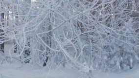 Κλάδοι δέντρων σε hoar χειμώνας εποχής τοπίων ωρών Δάσος στο χιόνι απόθεμα βίντεο