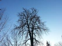 Κλάδοι δέντρων στο υπόβαθρο ουρανού Στοκ Εικόνα