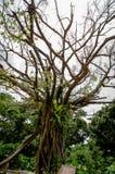 Κλάδοι δέντρων συστάδων στοκ εικόνα