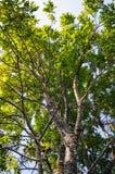 Κλάδοι δέντρων Στοκ φωτογραφία με δικαίωμα ελεύθερης χρήσης