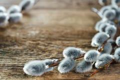 Κλάδοι ιτιών γατών στο αγροτικό ξύλινο θολωμένο υπόβαθρο Στοκ Εικόνες