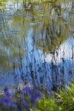 Κλάδοι ιτιών πέρα από την καλυμμένη μαξιλάρι λίμνη κρίνων Στοκ Εικόνες