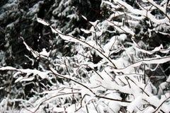 Κλάδοι κάτω από τη ισχυρή χιονόπτωση Στοκ εικόνες με δικαίωμα ελεύθερης χρήσης