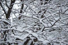 Κλάδοι κάτω από το χιόνι Στοκ εικόνες με δικαίωμα ελεύθερης χρήσης