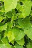 Κλάδοι και φύλλα Στοκ Φωτογραφία