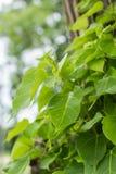 Κλάδοι και φύλλα Στοκ Εικόνες