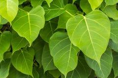 Κλάδοι και φύλλα Στοκ Φωτογραφίες