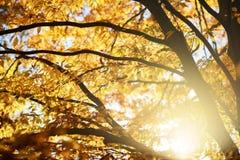Κλάδοι με τα κίτρινα φύλλα Στοκ φωτογραφία με δικαίωμα ελεύθερης χρήσης